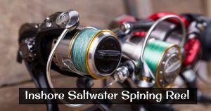 Best Inshore Saltwater Spining Reel in 2021